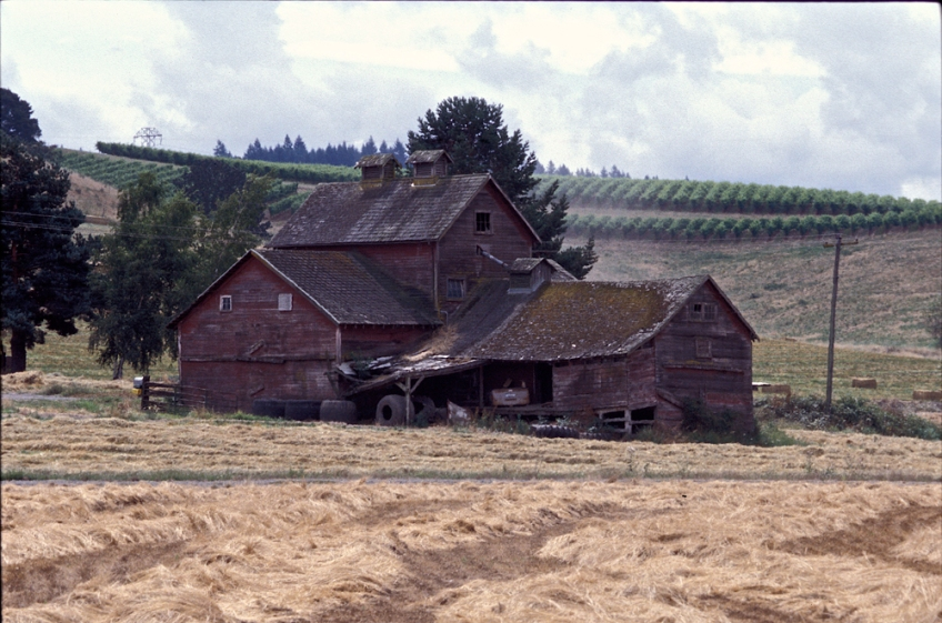 photo of Old Barn and Vineyard in Oregon