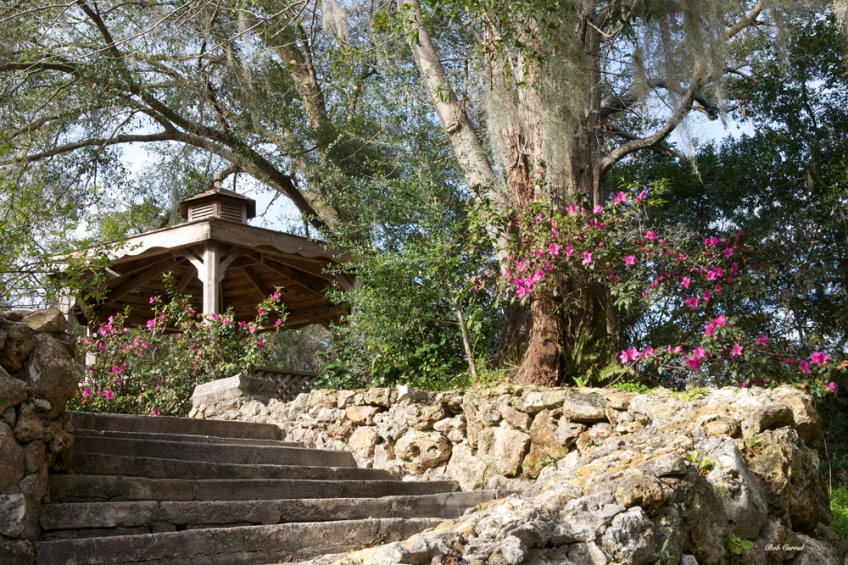 photo of steps leading to gazebo at Ravine gardens State Park, Palatka, Florida