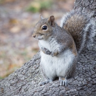 photo of Squirrel taken in lake Como, Florida