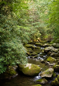 photo of Smokey Mountains Brook, Smokey Mountains National Park