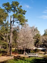 photo of walking bridge at Ravine Gardens State Park, Palatka, FL