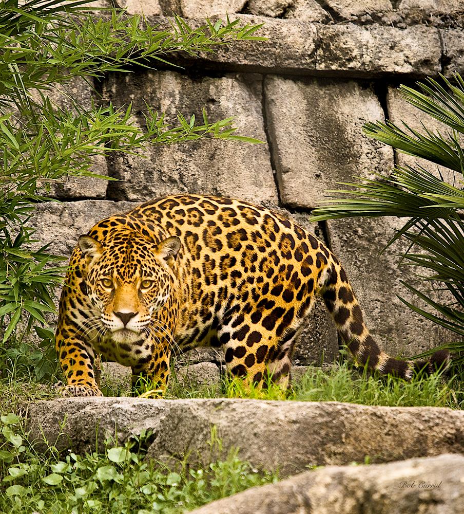 Yellow Jaguar Animal: Animals & Flowers