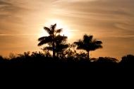 photo of sunset through palms at Everglades National Park