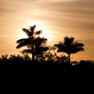 photo of sunset through palms at Everglades National Park
