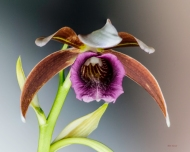 Photo of orchid : close up focus stack