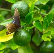 photo of Butterfly on Tangerine