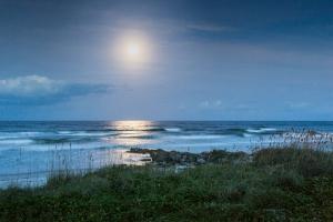 Moonlit Marineland # 388
