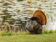 photo of Turkey by lake