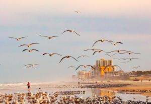 Photo of Seagulls in Flight at Daytona Beach Shores, FL