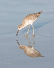 Photo of Sandpiper
