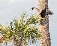 photo of Anhinga Landing in Nest