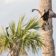 photo of Anhinga Landing in Nest