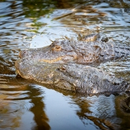 photo of Gators together