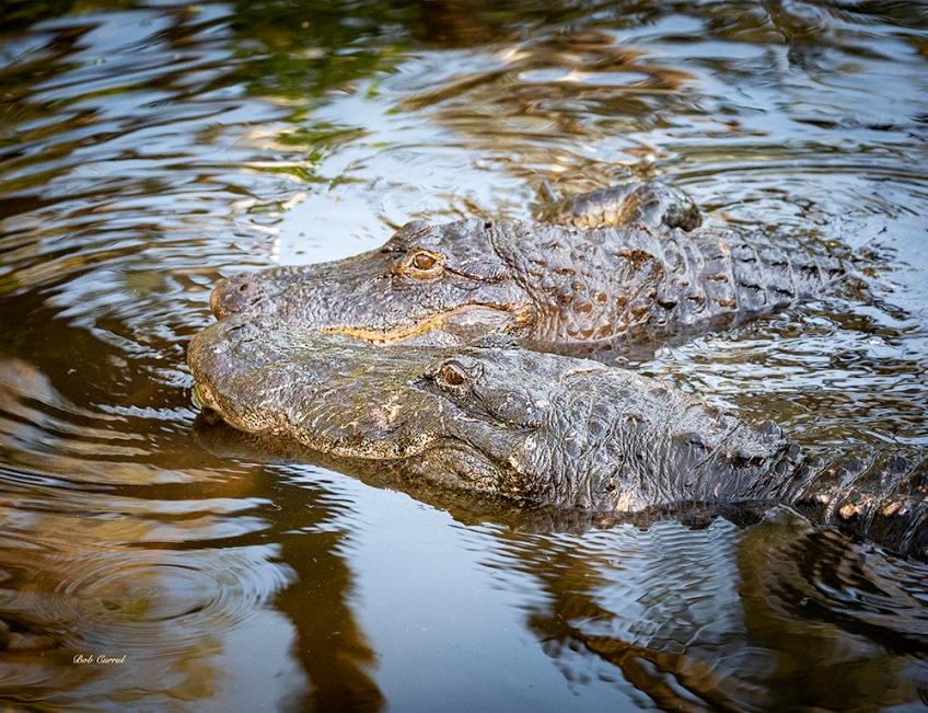 photo of Gators together