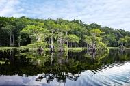 photo of Lake Disston Shore