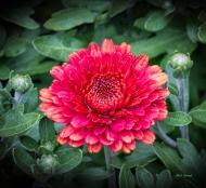 Connecticut Flower