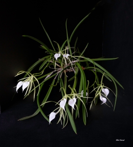 photo of small white orchids