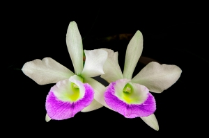 photo of Orchids