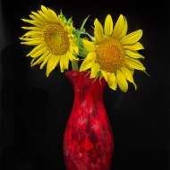 photo of Sunflowers in Vase