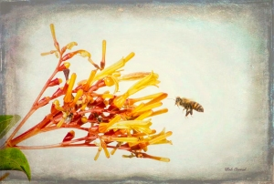 photo of Bee and Firebush