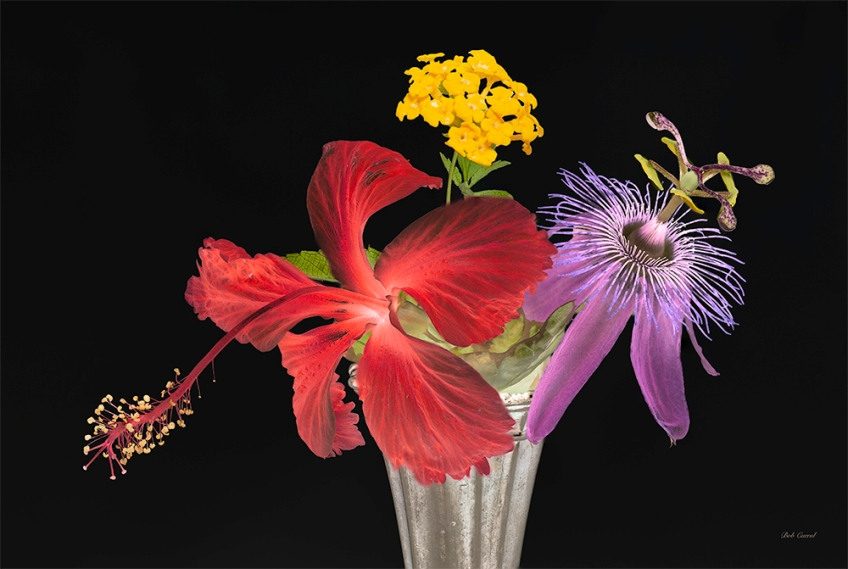 photo of Hibiscus, Passion Flower and Lantana