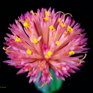 Macro photo of Tased Flower