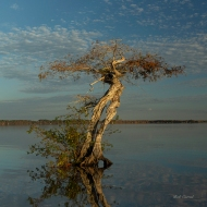 photo of Tree in Lake Disston