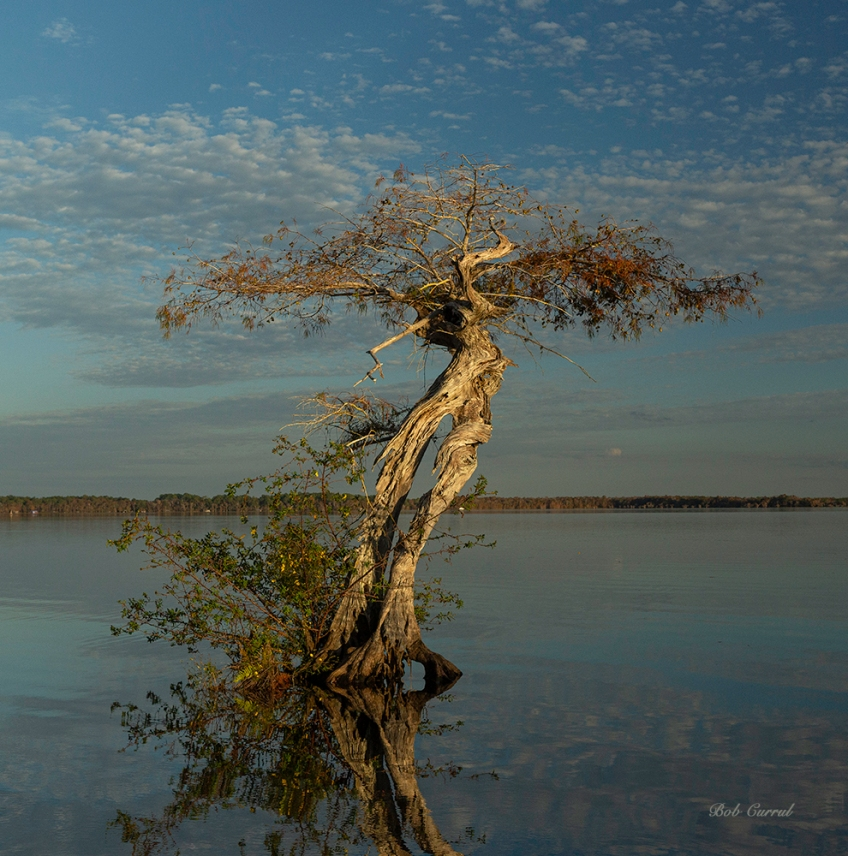 photo of Tree in Lake Disston