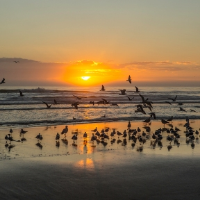 photo of Beach Sunrise