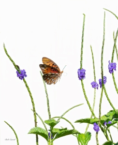 photo of Butterfly in Porter Weed
